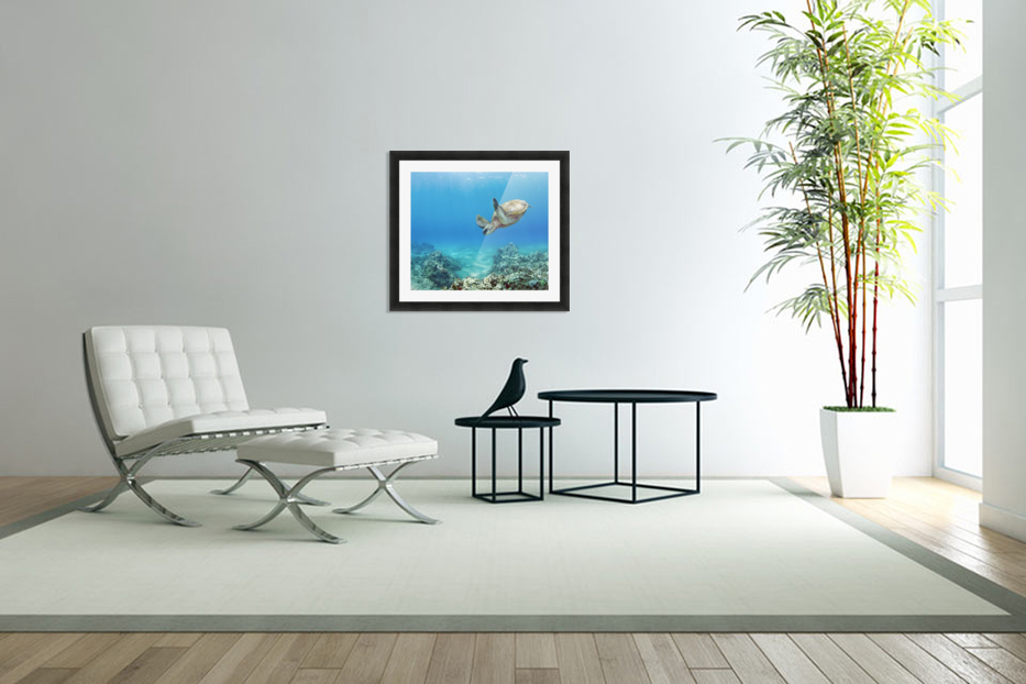 Hawaii, Green Sea Turtle (Chelonia Mydas) An Endangered Species. in Custom Picture Frame