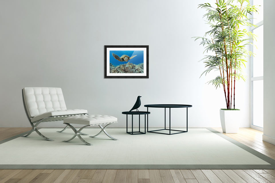 USA, Green Sea Turtle (Chelonia Mydas); Hawaii in Custom Picture Frame