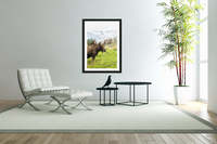 Bull moose (alces alces) with antlers in velvet, captive in Alaska Wildlife Conservation Center, South-central Alaska; Portage, Alaska, United States of America  Acrylic Print