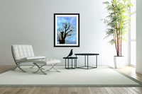 Tree Without Leaf  Acrylic Print