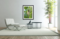 A Sparrow Perched On A Small Branch; Tarifa, Cadiz, Andalusia, Spain  Acrylic Print