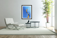 Forest cobra (naja melanoleuca) against a blue background;British columbia canada  Acrylic Print