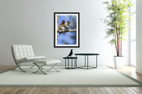 Eastern grey squirrel (Sciurus carolinensis) perched on a branch; Quebec, Canada  Acrylic Print