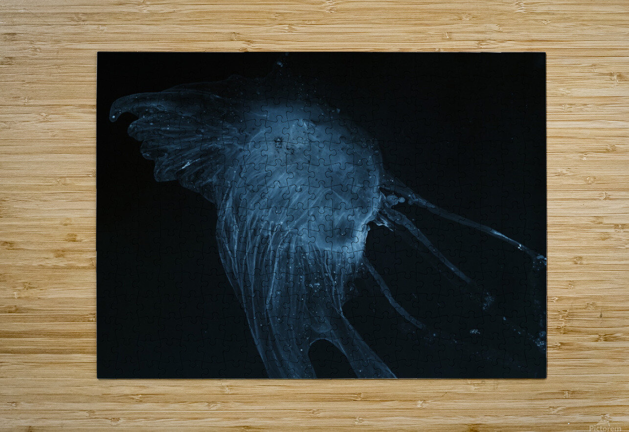 Glowing blue jellyfish in the dark water  HD Metal print with Floating Frame on Back