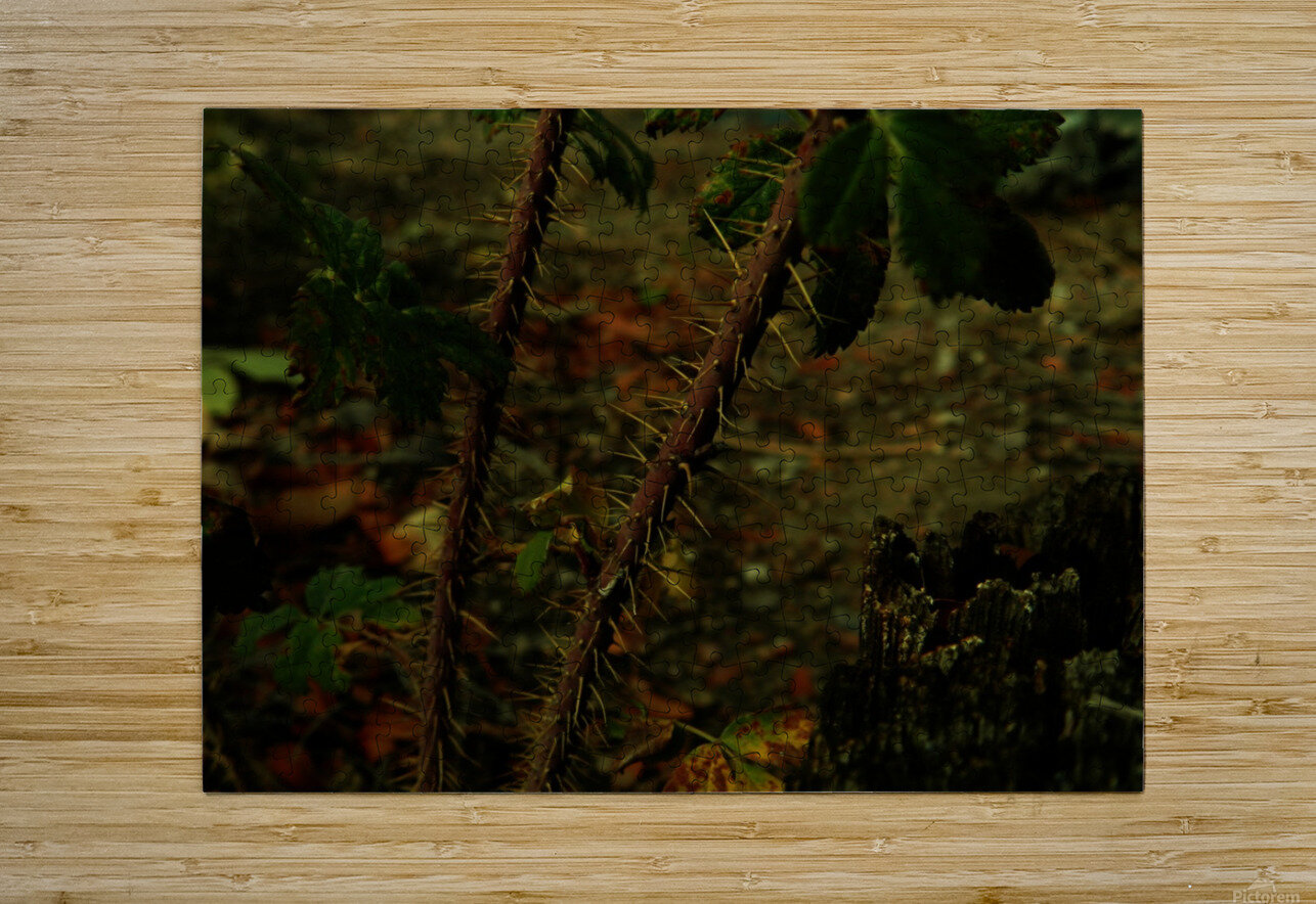 sofn-163F956E  HD Metal print with Floating Frame on Back