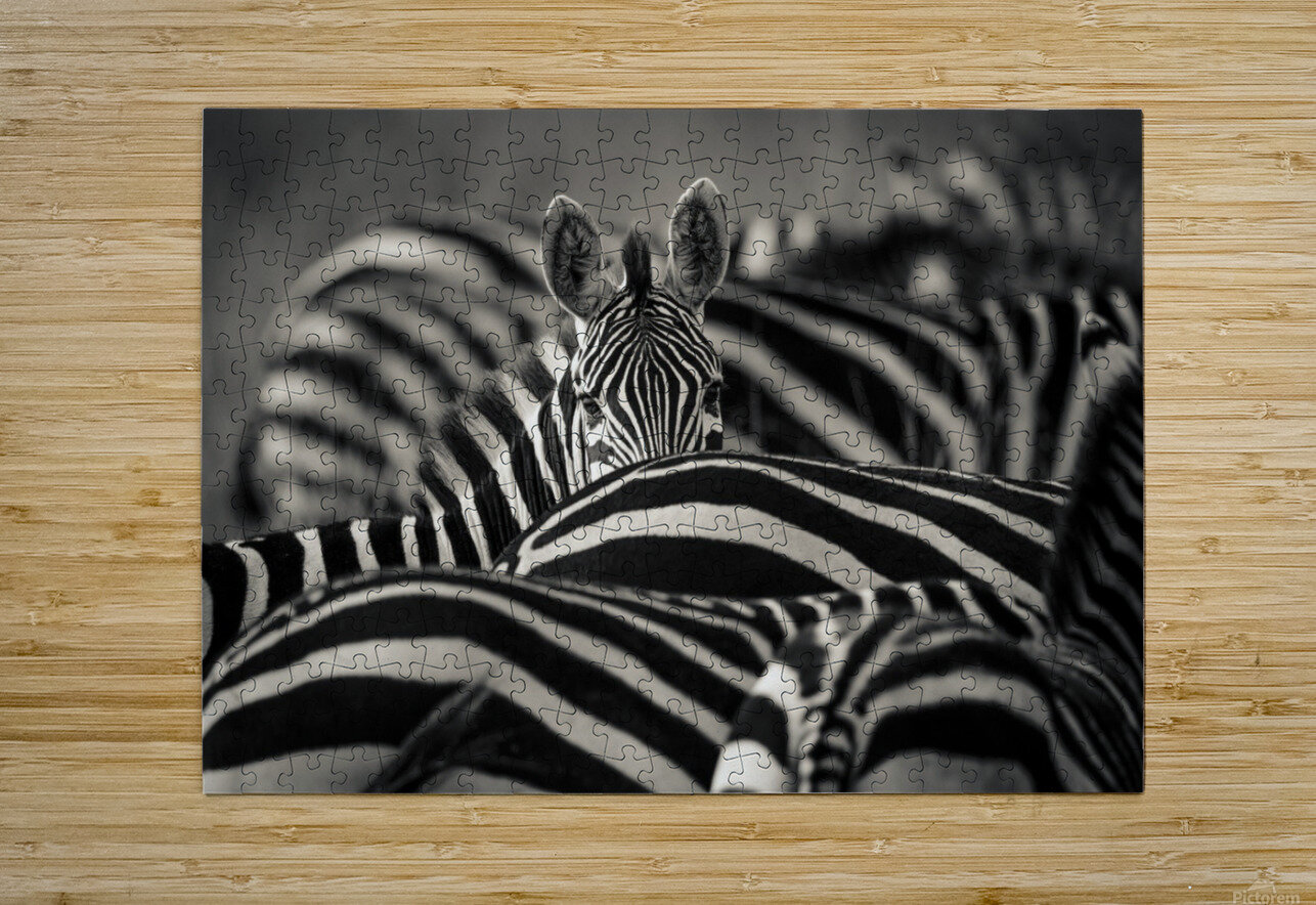Between the Lines  HD Metal print with Floating Frame on Back