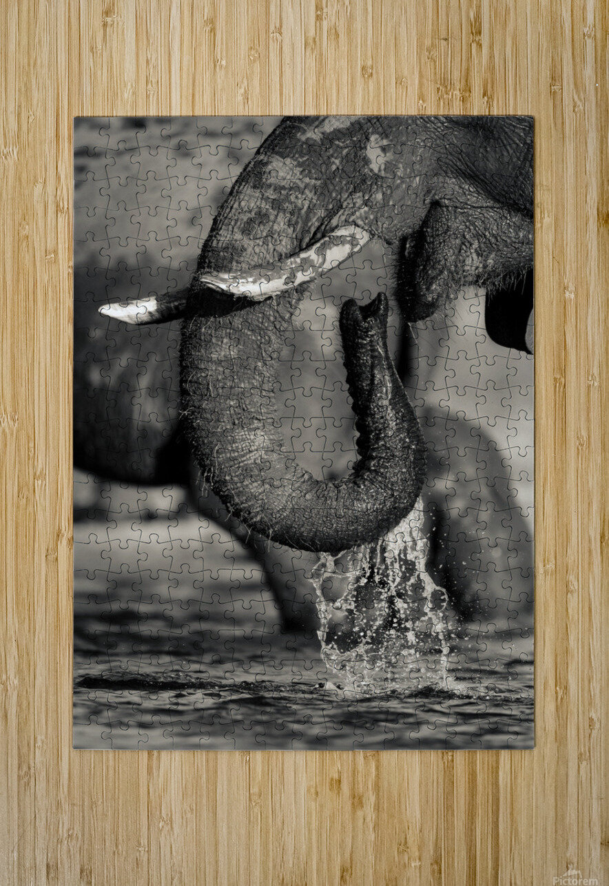 Thirst  HD Metal print with Floating Frame on Back
