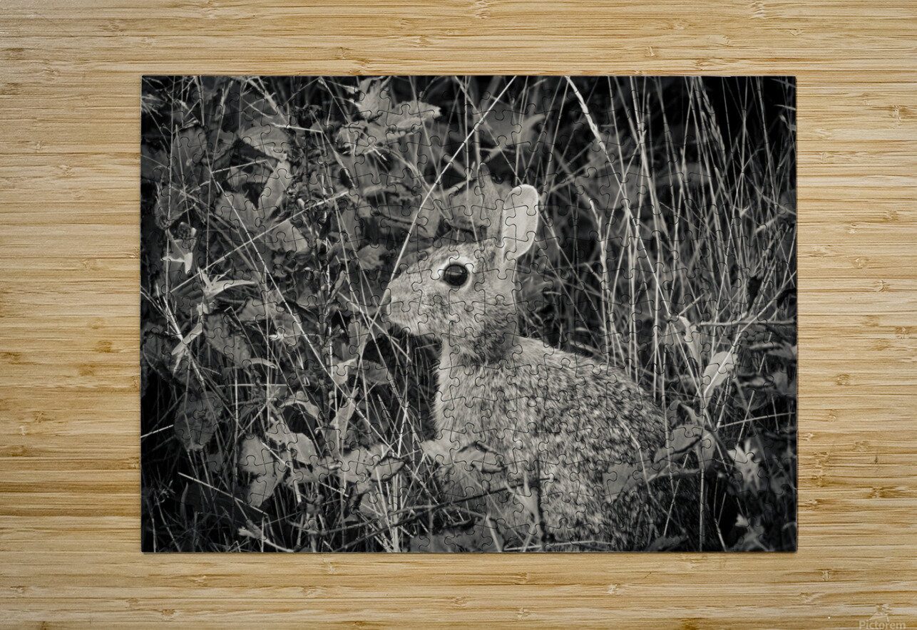 Do you see me  HD Metal print with Floating Frame on Back