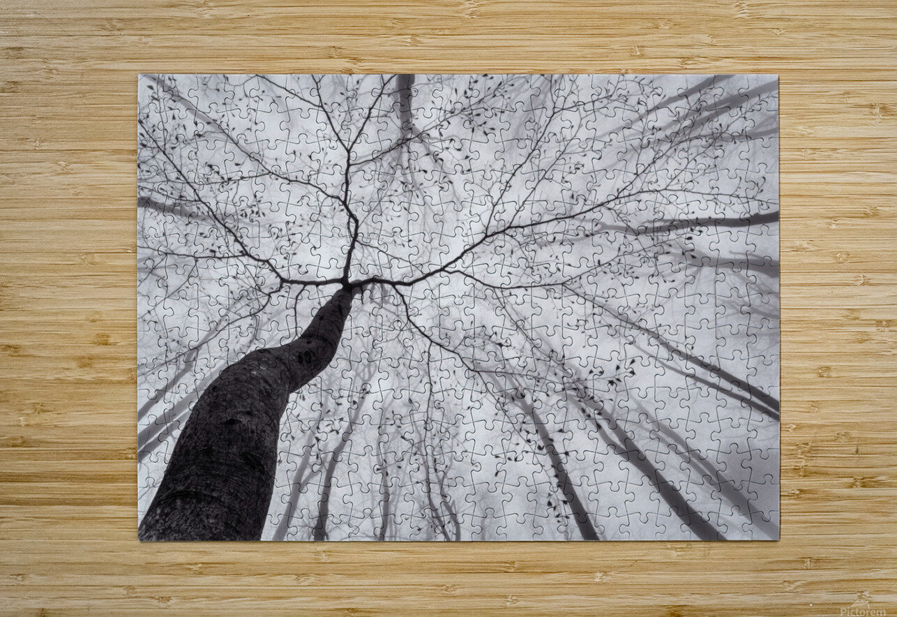 A view of the tree crown  HD Metal print with Floating Frame on Back