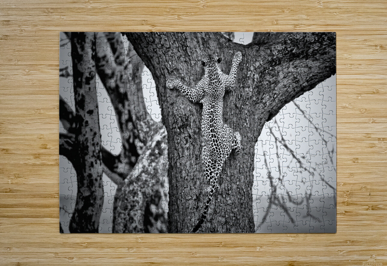 Spiderman  HD Metal print with Floating Frame on Back