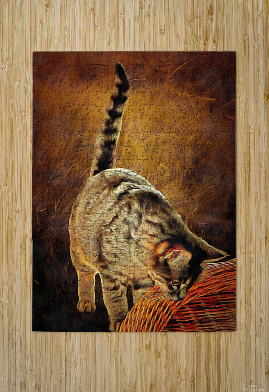Curiosity And The Cat  HD Metal print with Floating Frame on Back