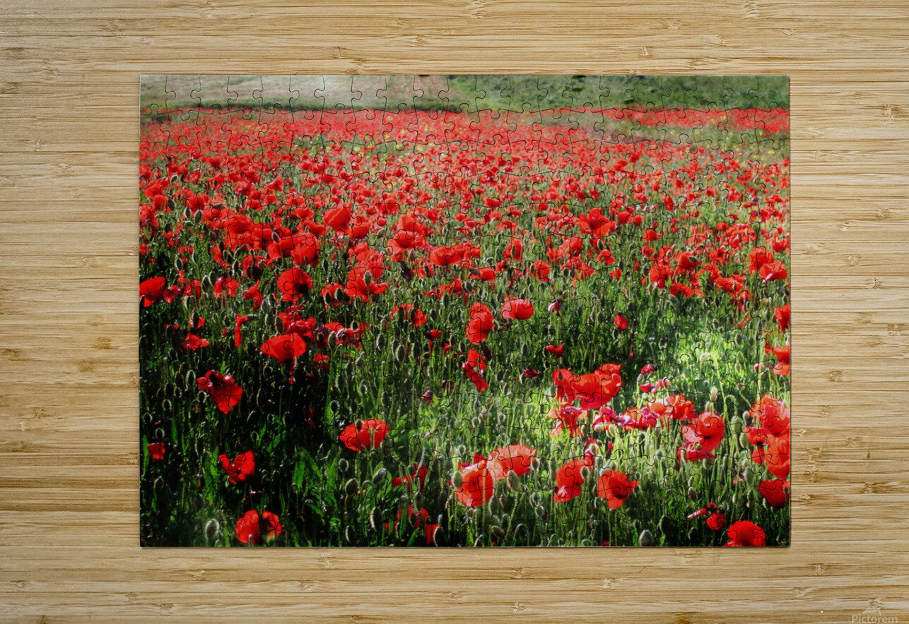 Rolling Fields with Poppies  HD Metal print with Floating Frame on Back