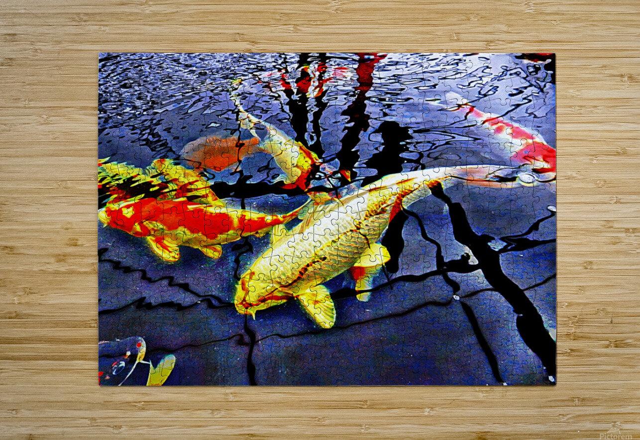 Koi Carp Huddle  HD Metal print with Floating Frame on Back