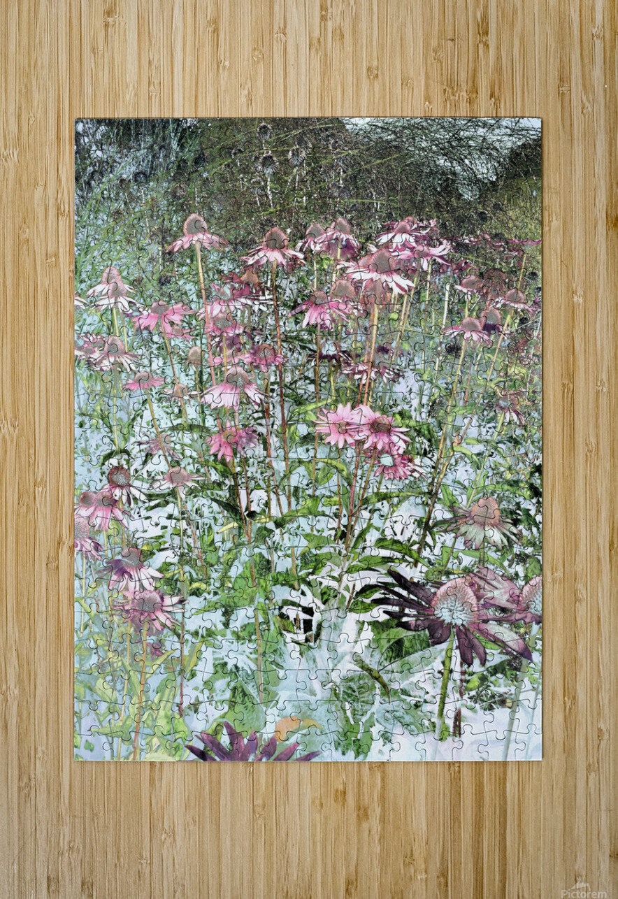 Echinacea  HD Metal print with Floating Frame on Back