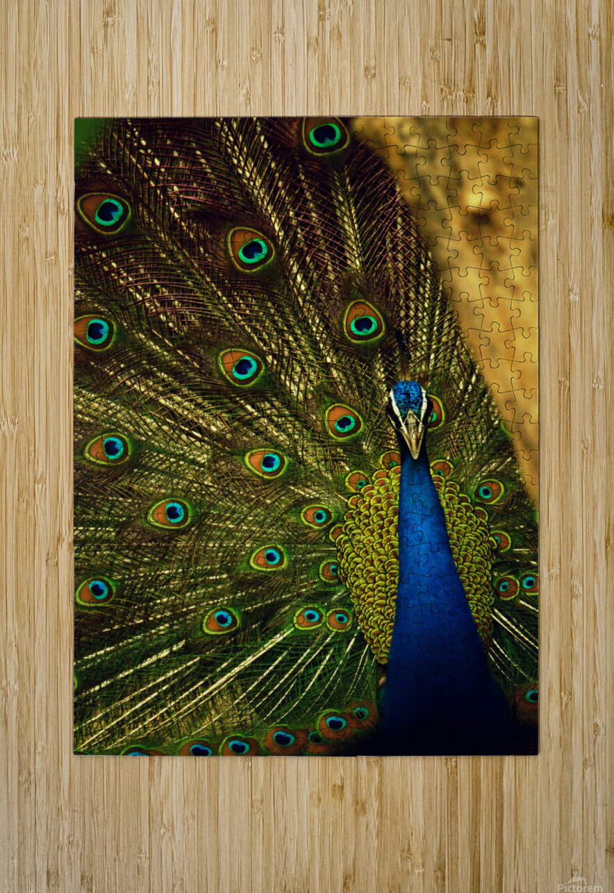 blue and green peafowl  HD Metal print with Floating Frame on Back