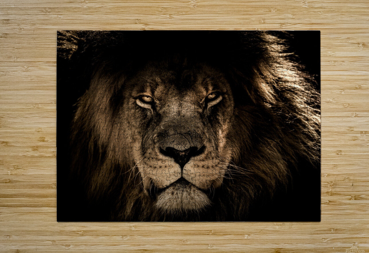 african lion wildcat mane closeup  HD Metal print with Floating Frame on Back