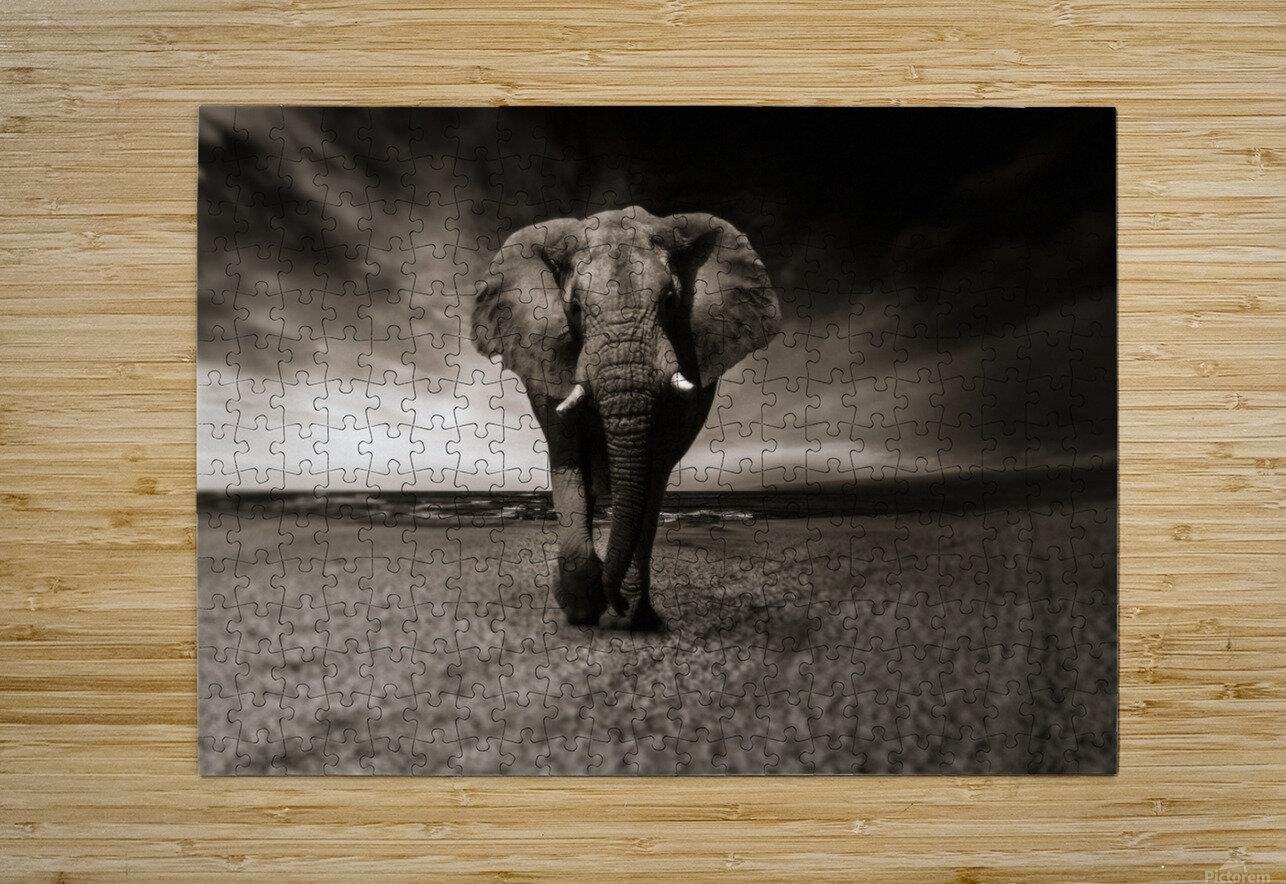 elephant animal africa safari  HD Metal print with Floating Frame on Back