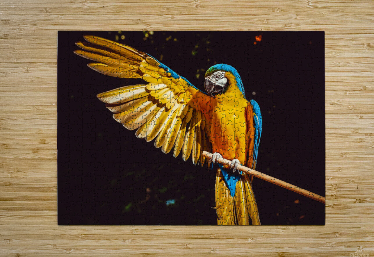 ara parrot yellow macaw bird  HD Metal print with Floating Frame on Back