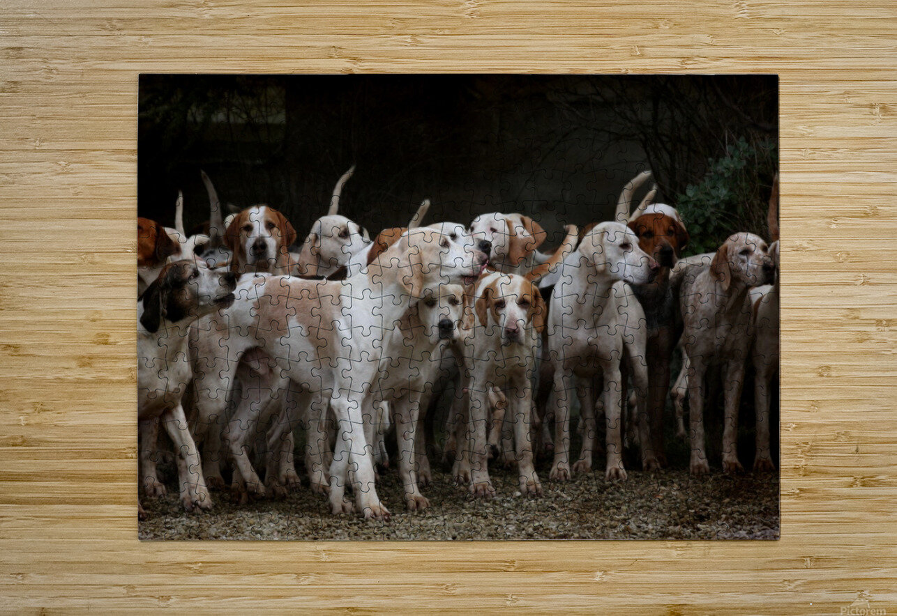 dog herd canine animal pet hounds  HD Metal print with Floating Frame on Back