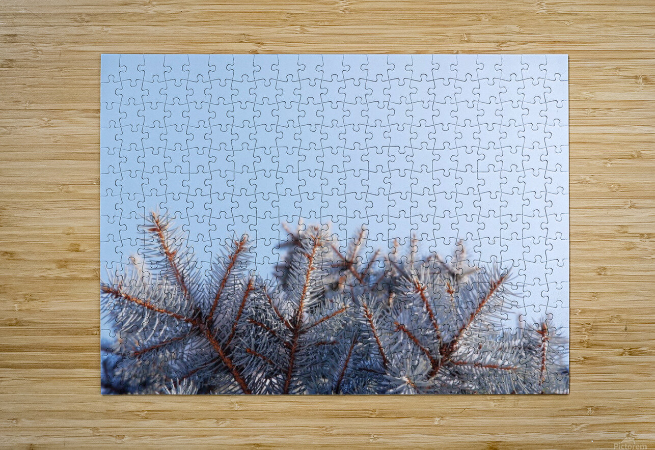 Winter Pines  HD Metal print with Floating Frame on Back