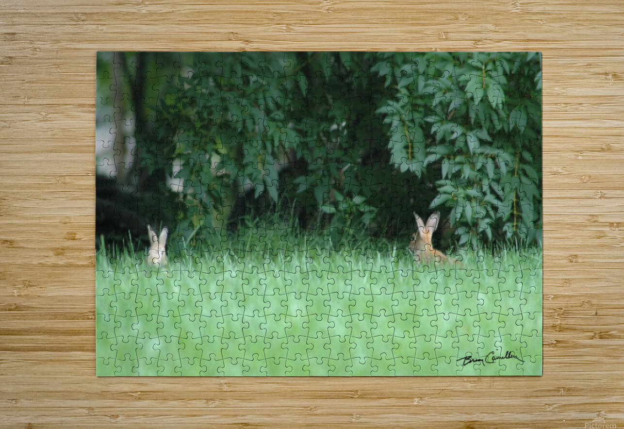 Bunnies Two  HD Metal print with Floating Frame on Back