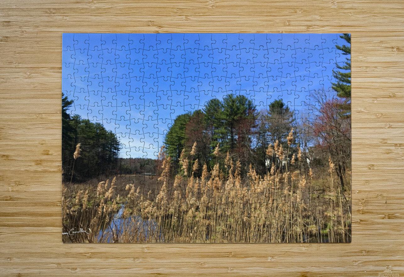 Simsbury Wetland  HD Metal print with Floating Frame on Back
