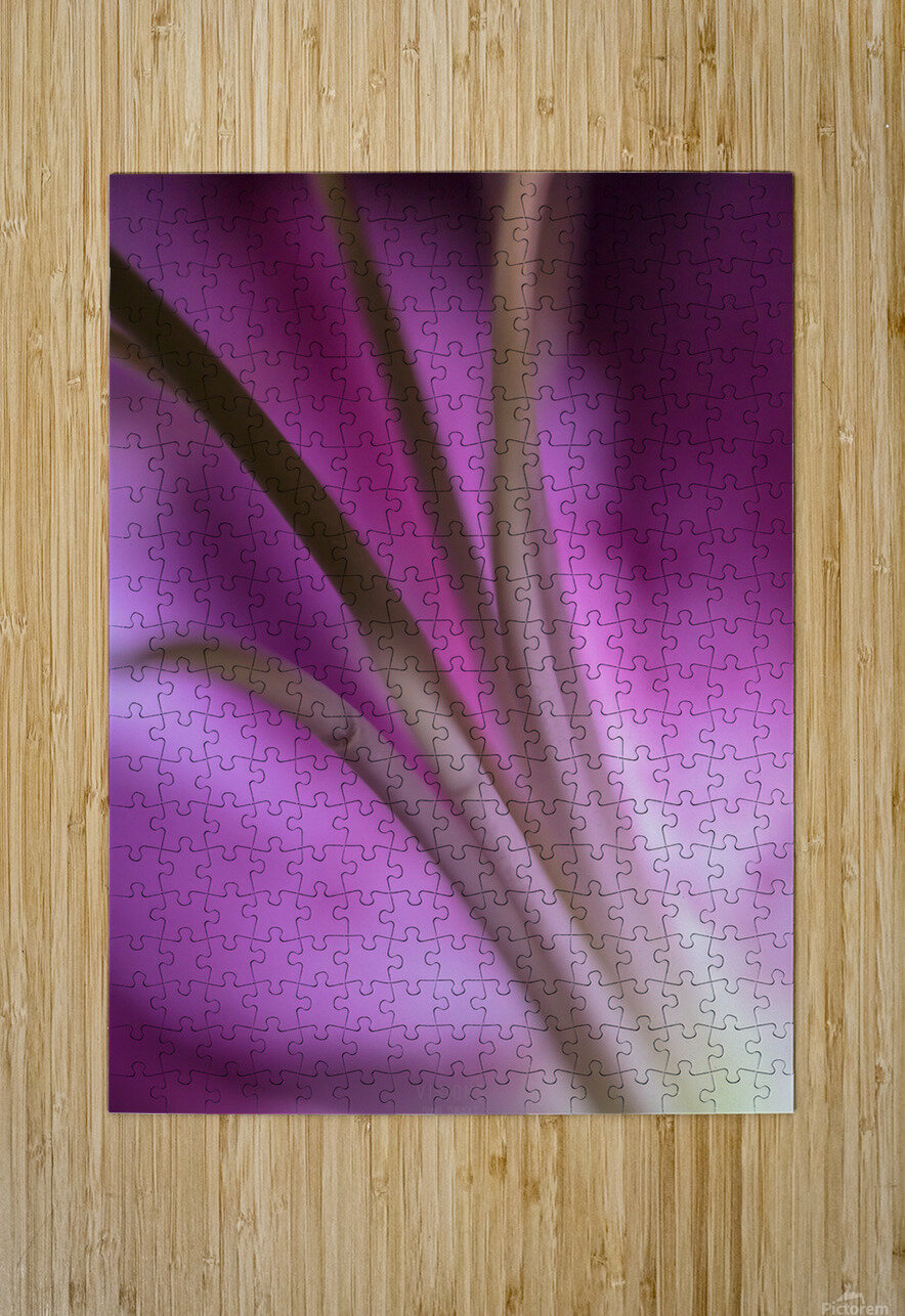 Pinky 5  HD Metal print with Floating Frame on Back