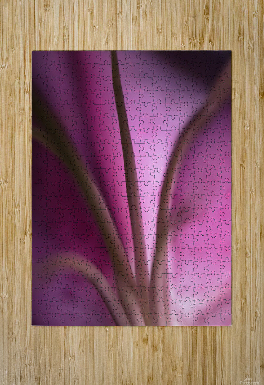 Pinky 4  HD Metal print with Floating Frame on Back