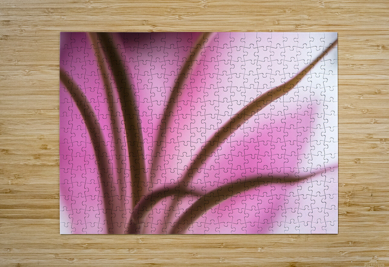 Pinky 3  HD Metal print with Floating Frame on Back