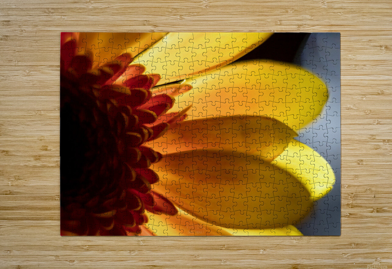 Jaune 3  HD Metal print with Floating Frame on Back