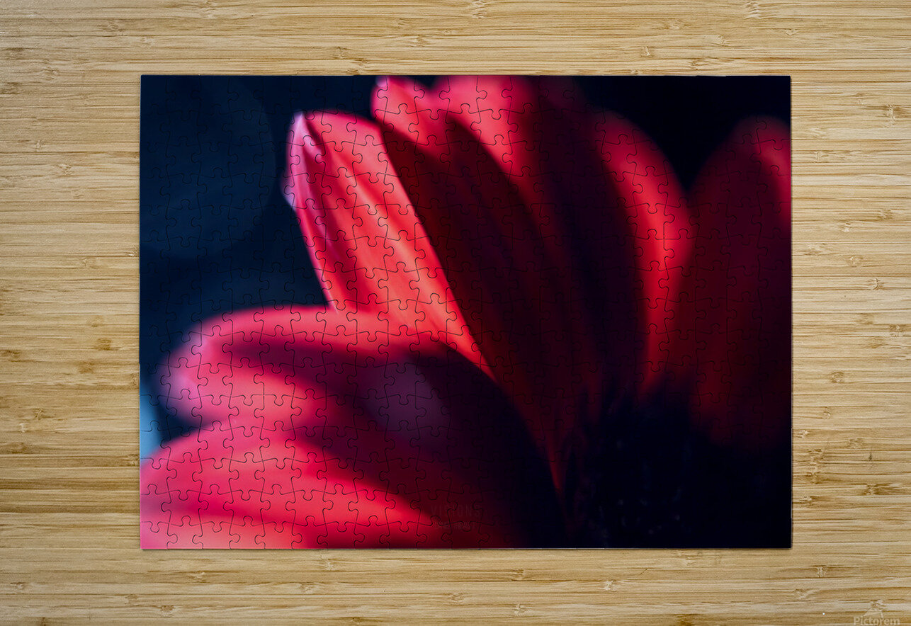 Red 1  HD Metal print with Floating Frame on Back
