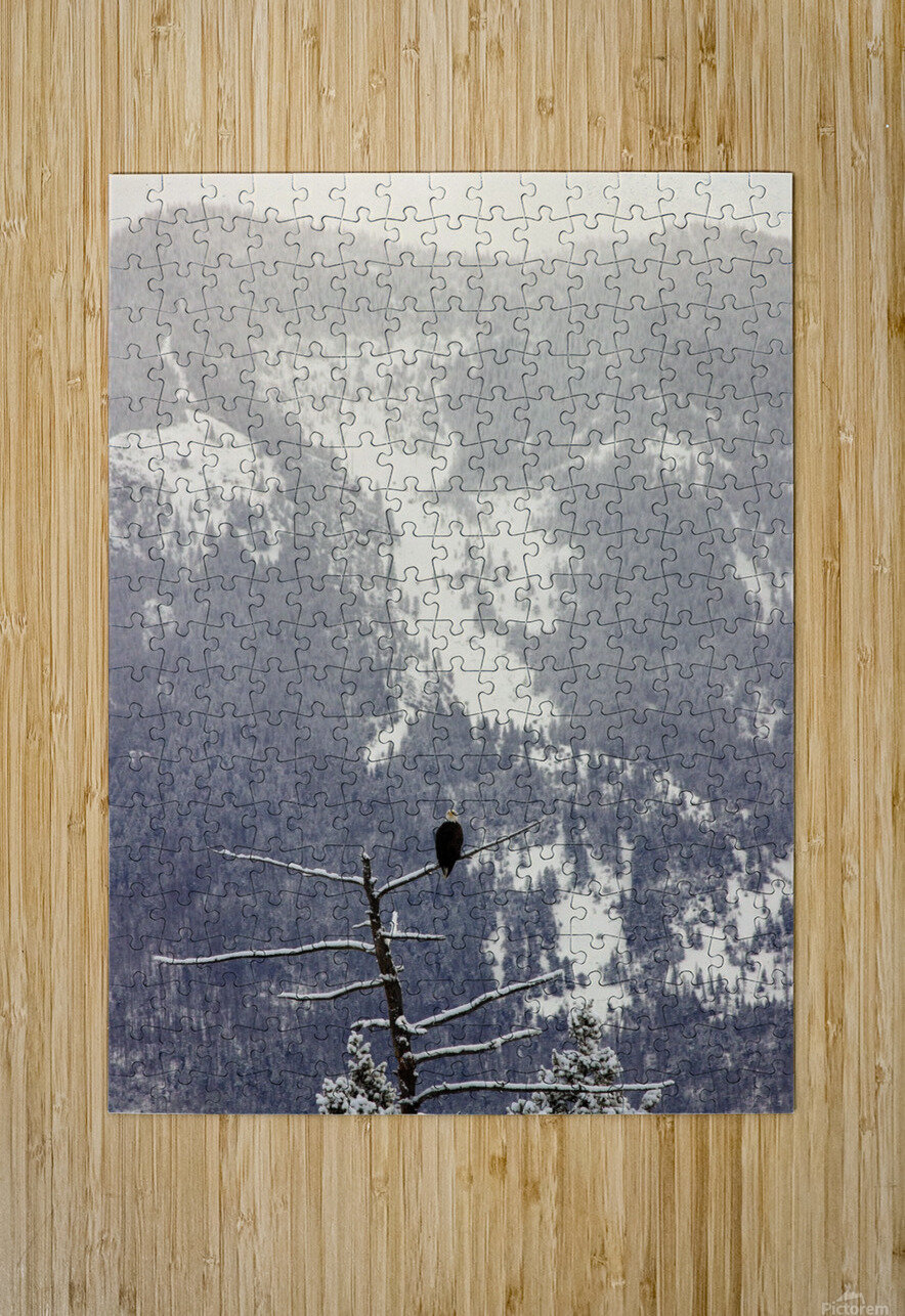 Snowy  HD Metal print with Floating Frame on Back