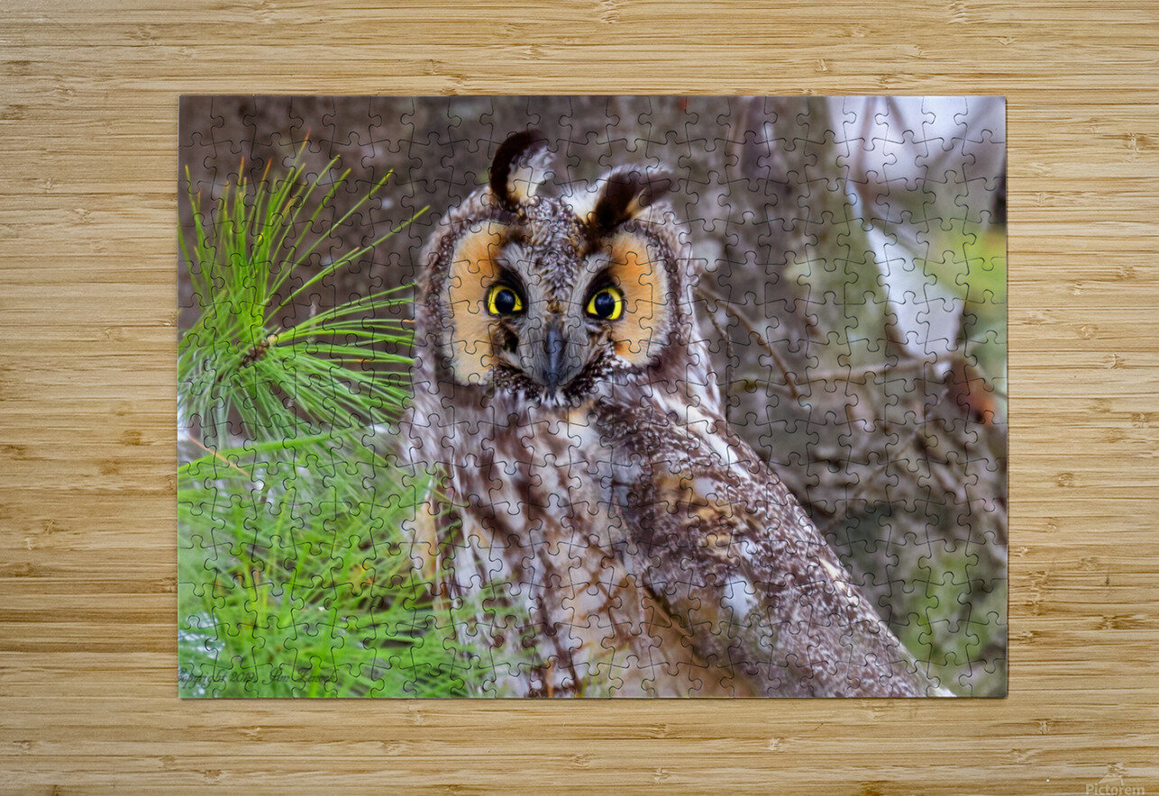 Owls  HD Metal print with Floating Frame on Back