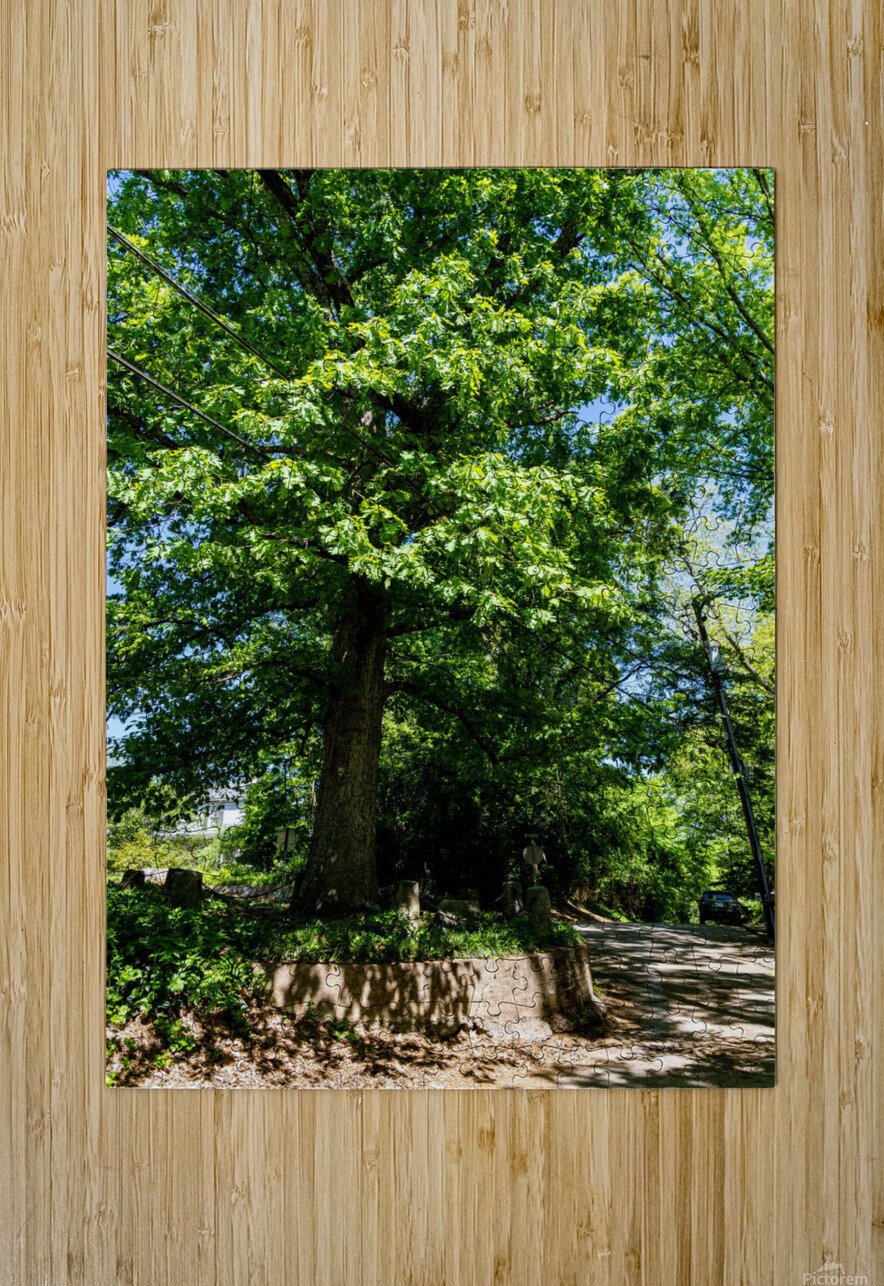 Tree Than Owns Itself   Athens GA 06567  HD Metal print with Floating Frame on Back