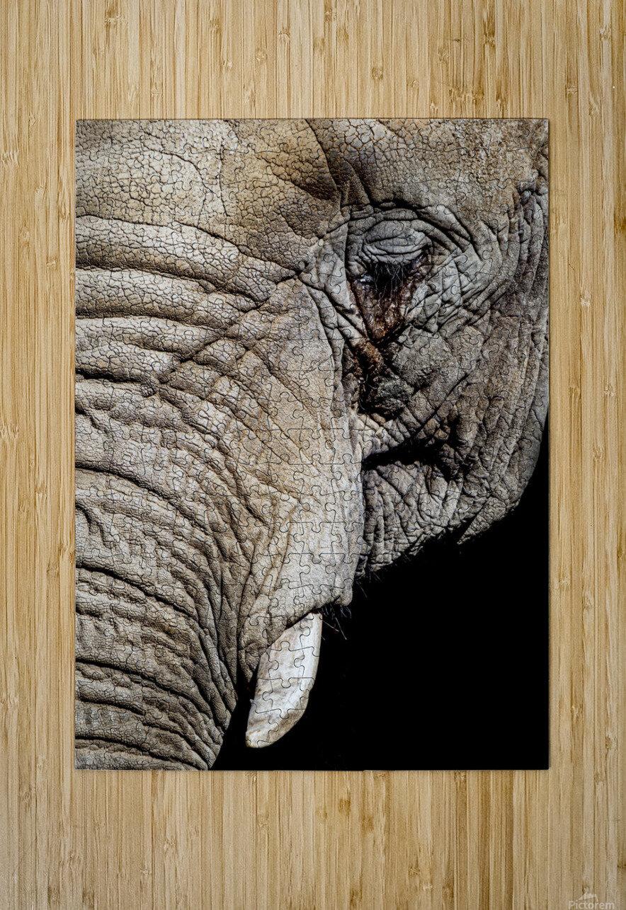 Elephant Close Up  Impression métal HD avec cadre flottant sur le dos