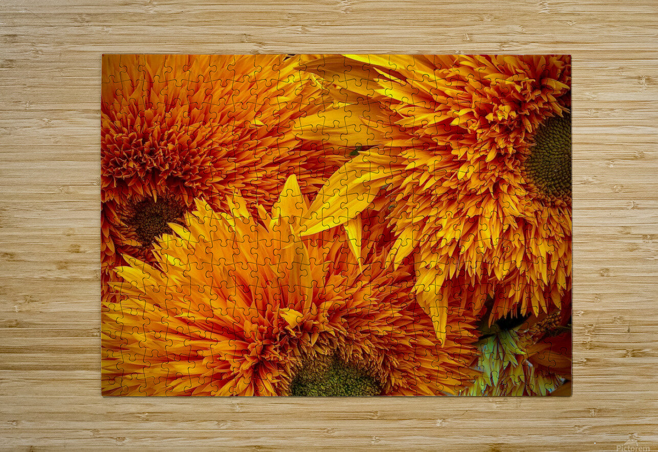Fluffy Yellow Sunflowers  HD Metal print with Floating Frame on Back