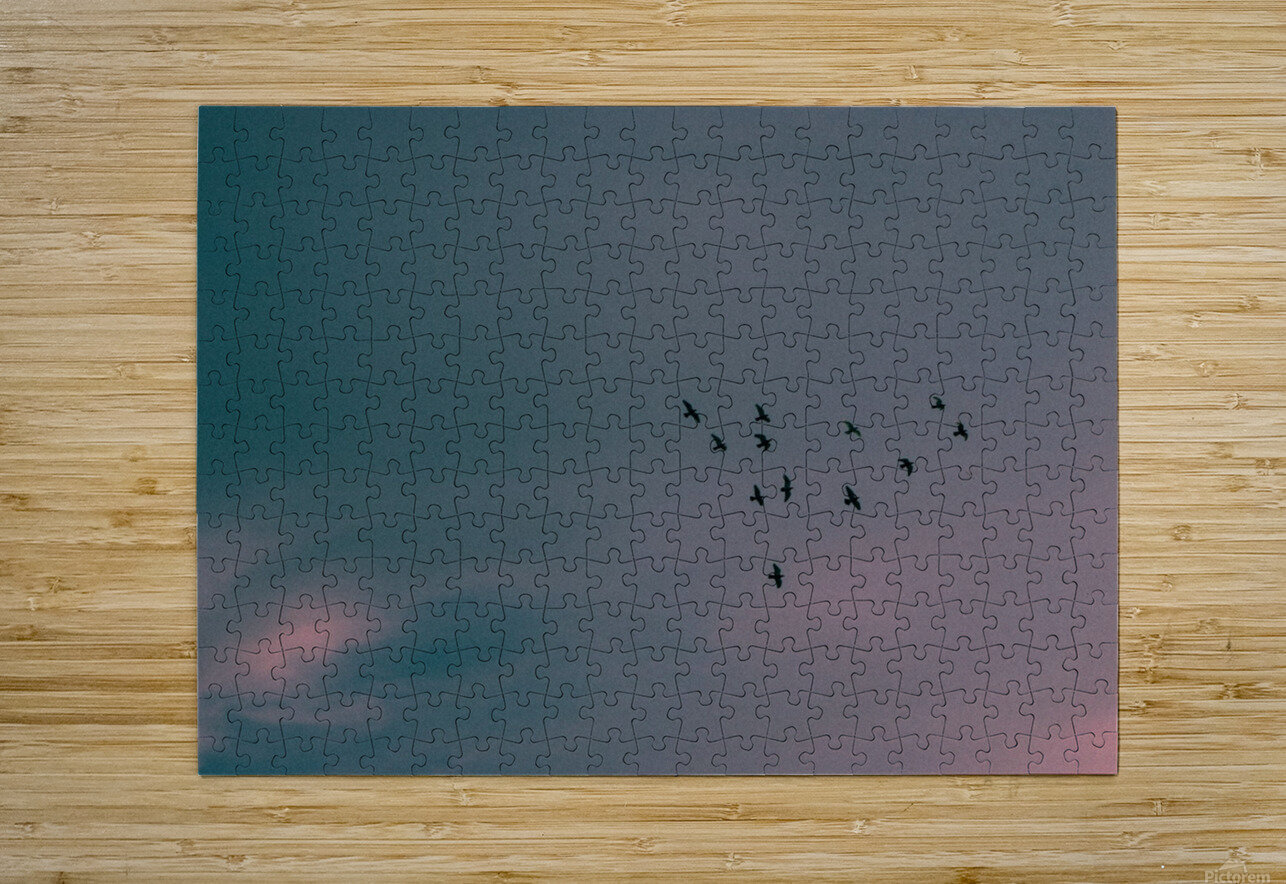 Flock of birds  HD Metal print with Floating Frame on Back