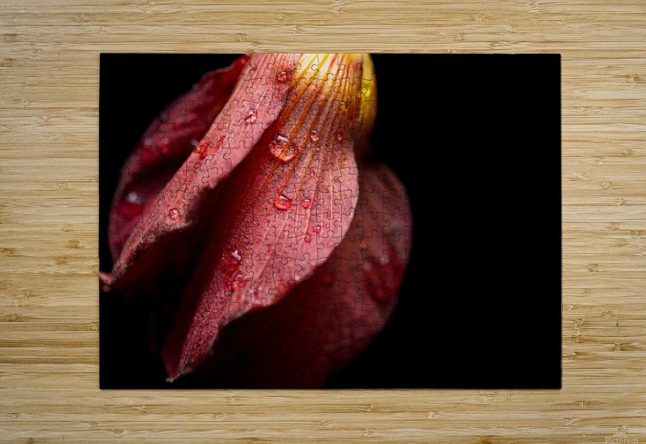 Elegance  HD Metal print with Floating Frame on Back