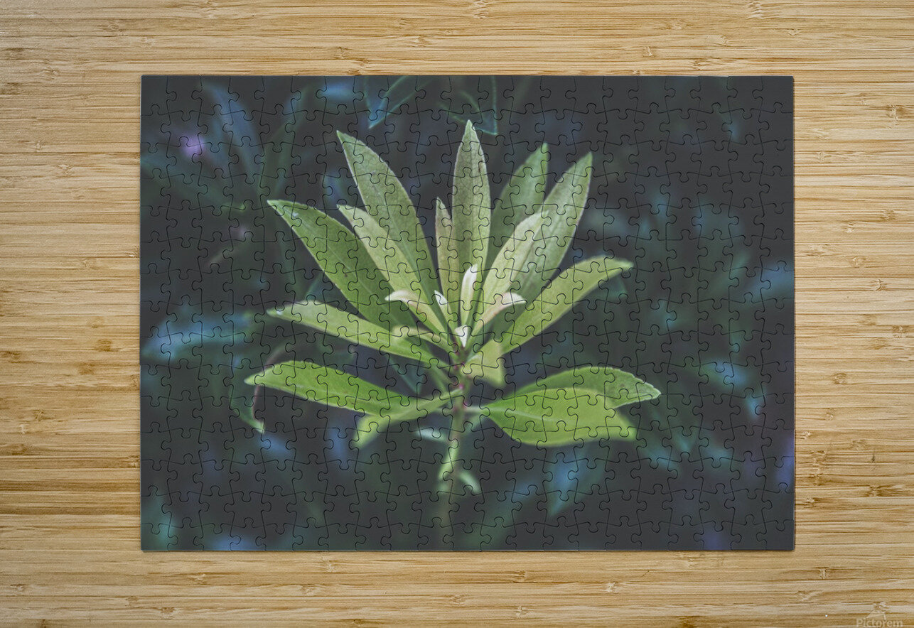 Bamboo shoots  HD Metal print with Floating Frame on Back
