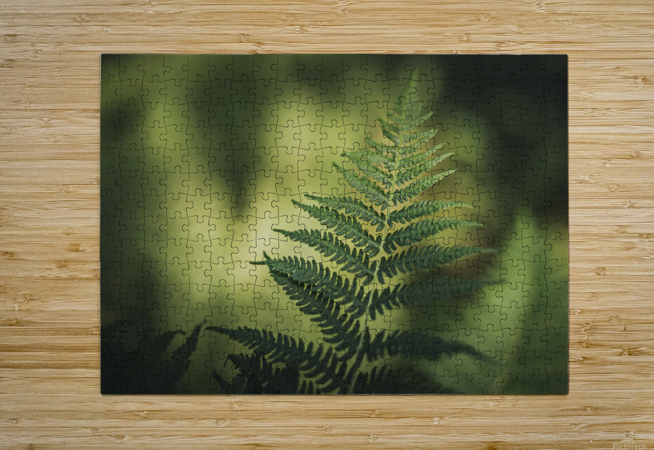 Green as the fern   HD Metal print with Floating Frame on Back