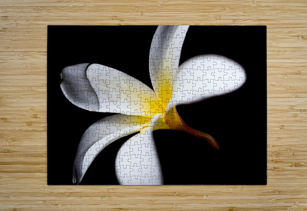 Simplicity  HD Metal print with Floating Frame on Back
