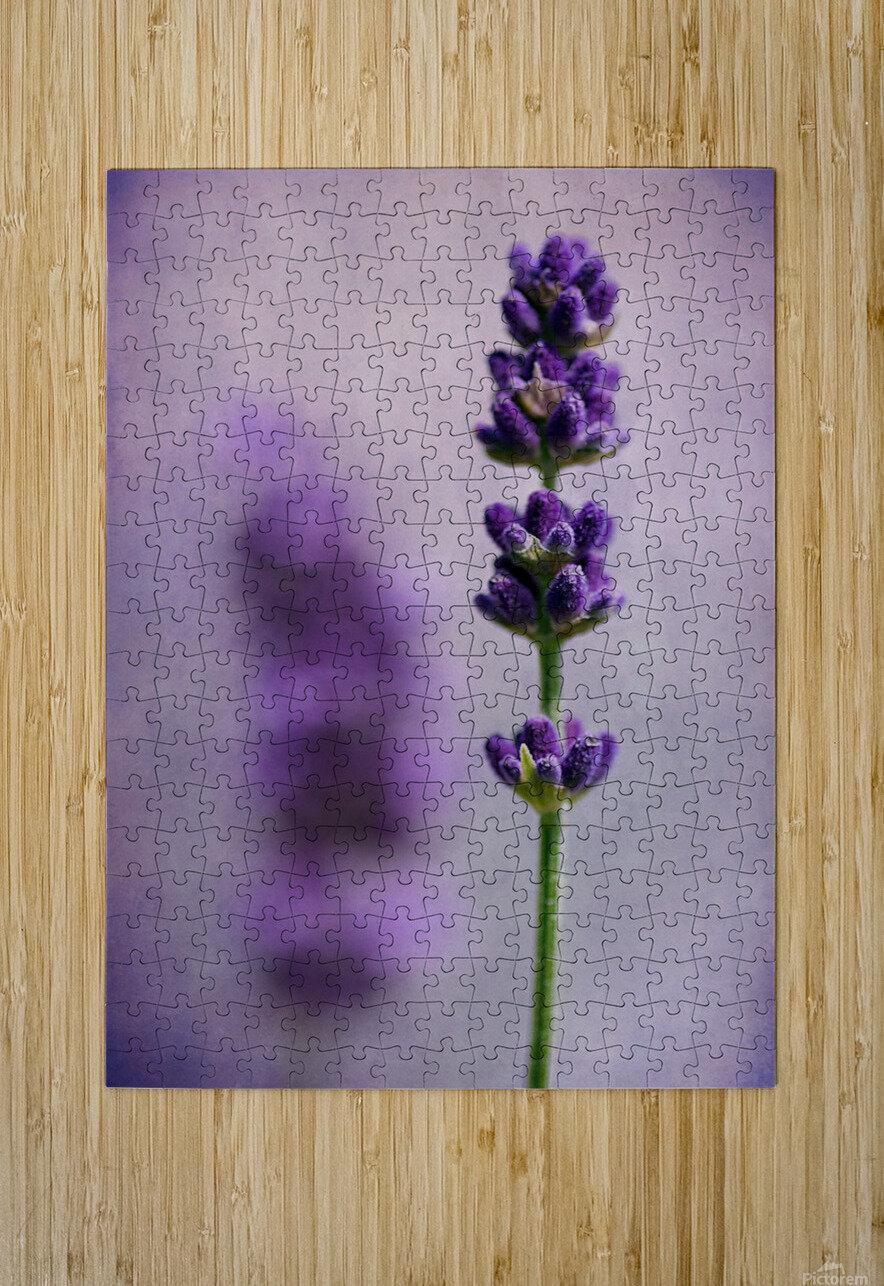 Lavender  HD Metal print with Floating Frame on Back