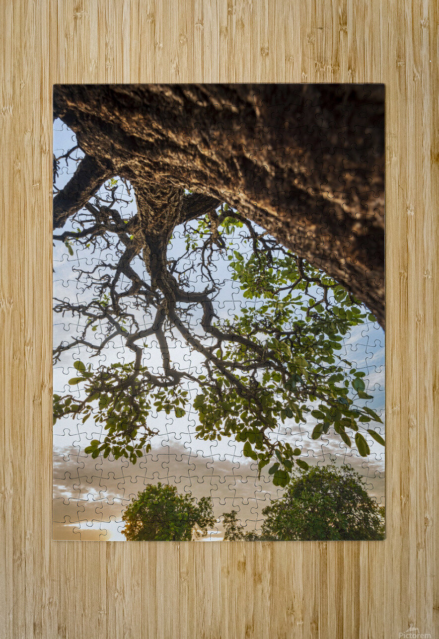 Resilience - Blessing  HD Metal print with Floating Frame on Back