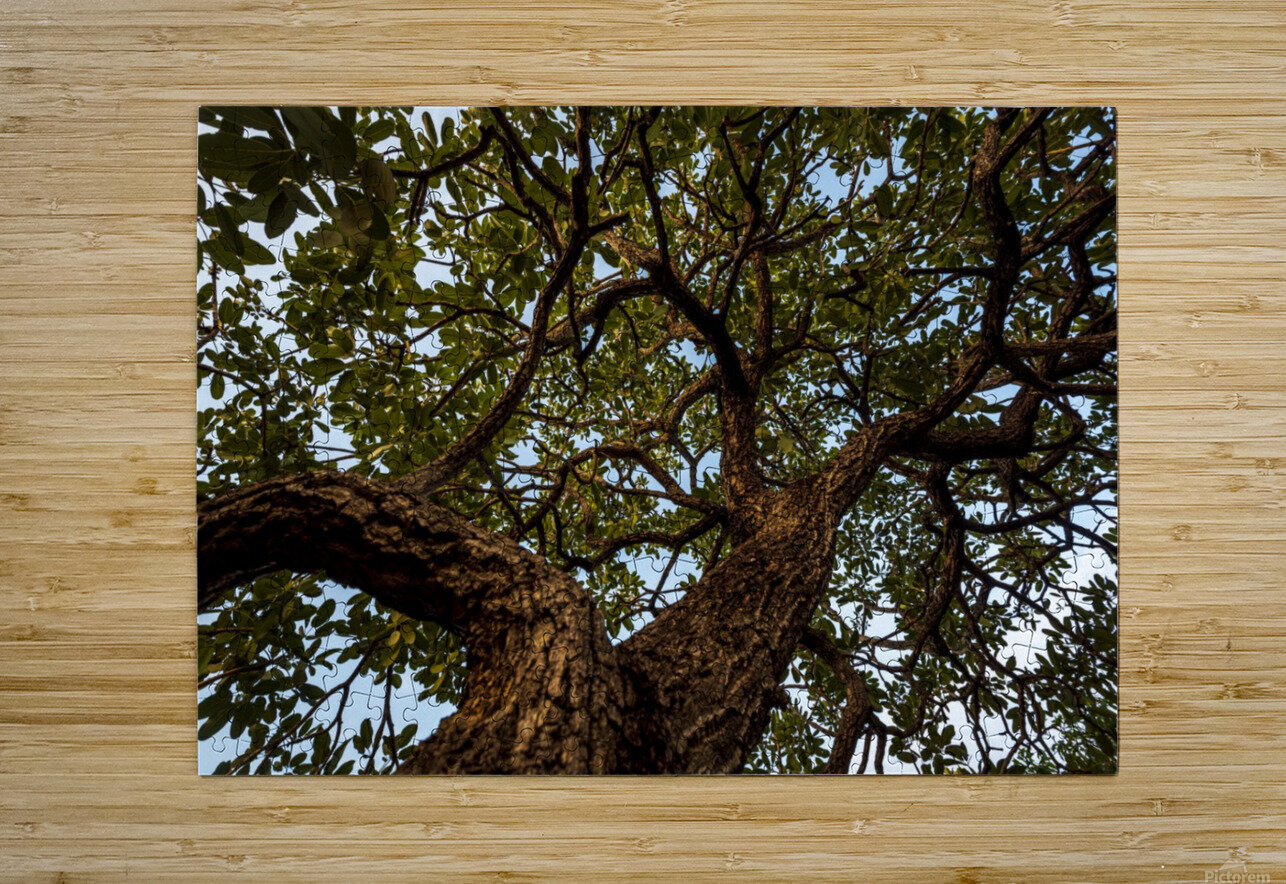 Resilience - width  HD Metal print with Floating Frame on Back