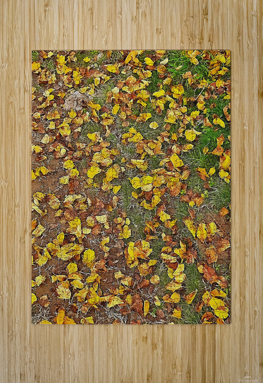 An Autumn Carpet  HD Metal print with Floating Frame on Back