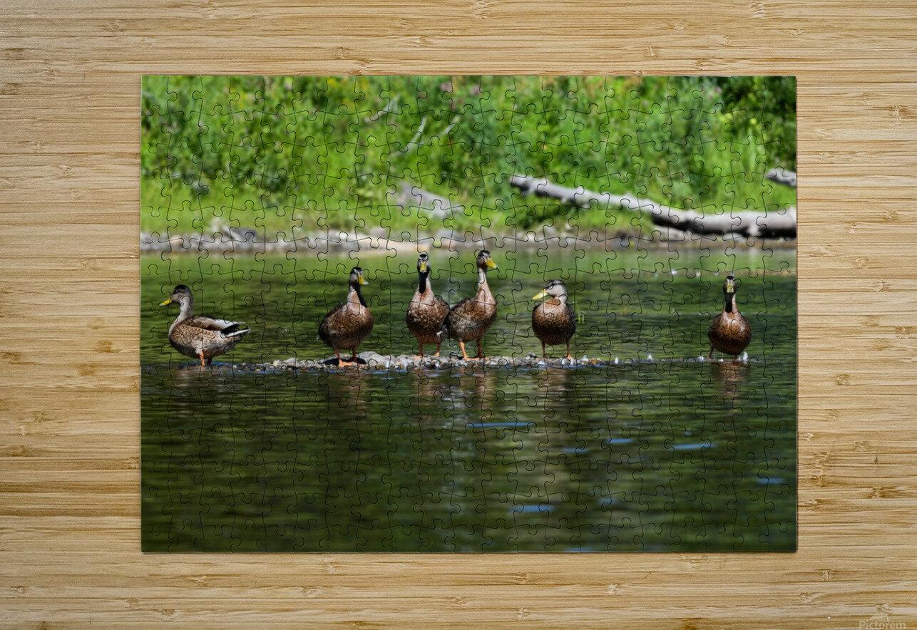 What the duck  Impression métal HD avec cadre flottant sur le dos