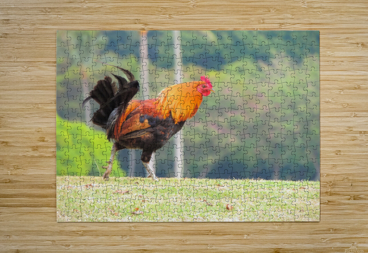 Red Rooster  HD Metal print with Floating Frame on Back