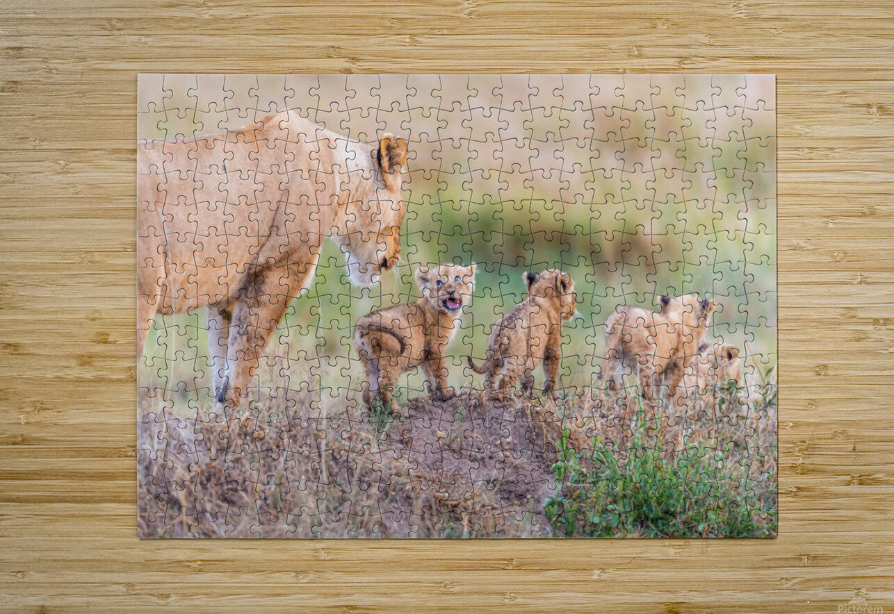 Let's Go Mom  HD Metal print with Floating Frame on Back