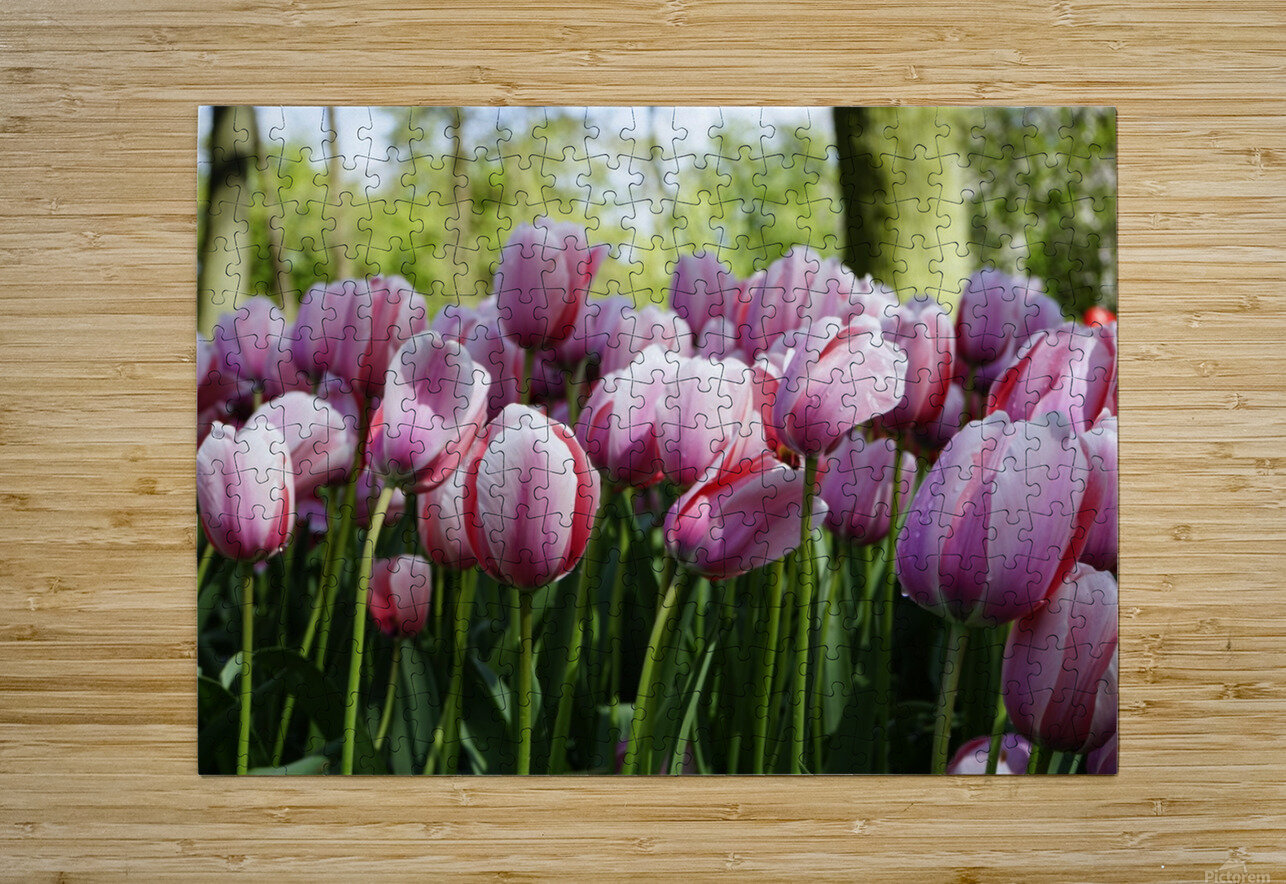 Pink & White  HD Metal print with Floating Frame on Back