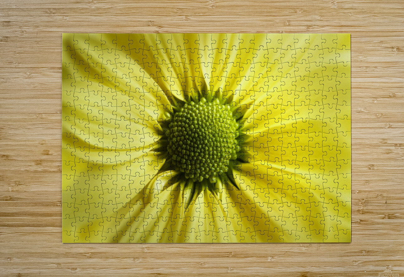 Yellow Daisy  HD Metal print with Floating Frame on Back